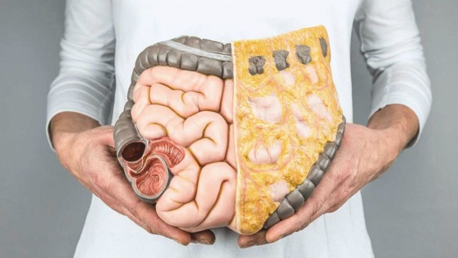Макет кишечника