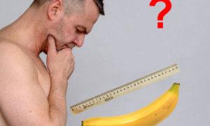 Половой член 16, 17, 18 см — нормально, много или мало