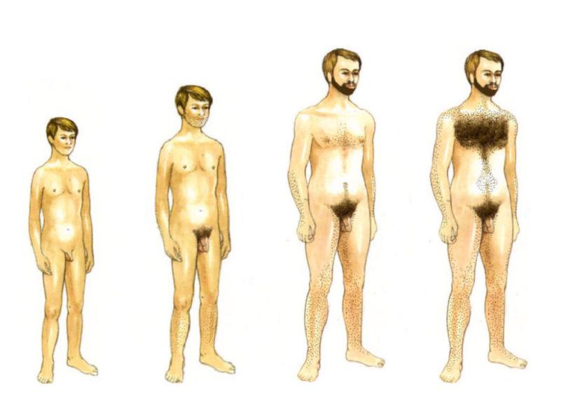 Развитие пениса