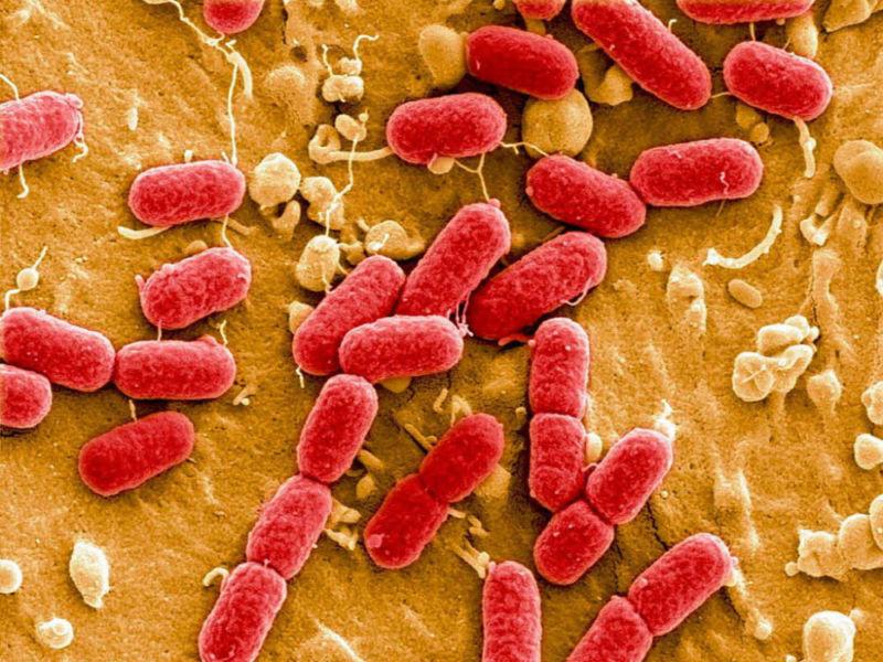 Бактерии при хроническом простатите